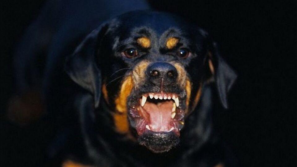 Томичка пойдет под суд за растерзанную собаками новорожденную дочь