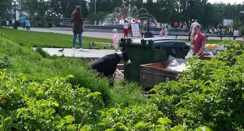 Томичей возмутили владельцы собаки, сделавшие ей «намордник» из скотча