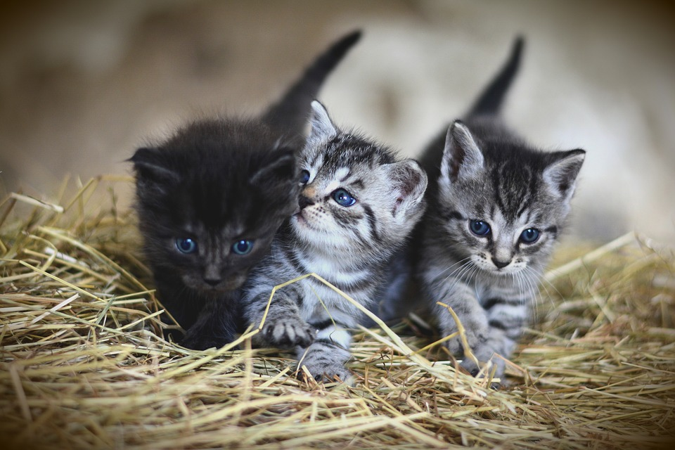 Число кошек и собак в квартире планируют ограничить