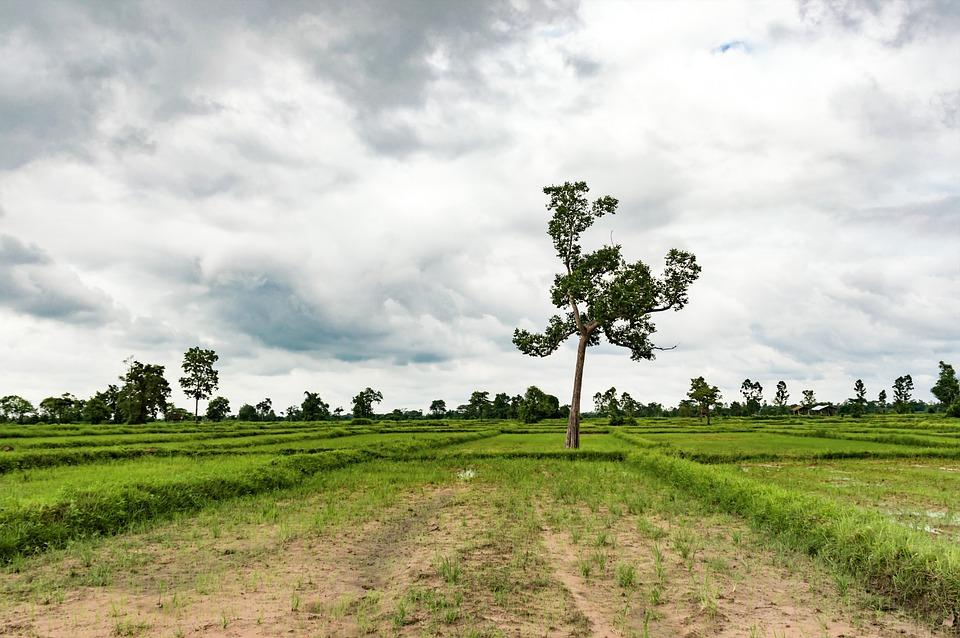 15 собственников земельных участков добровольно от них отказались