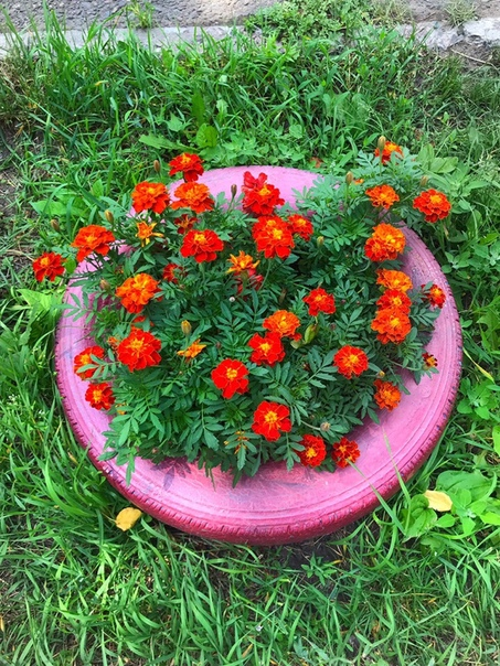 Сибирячка посадила помидоры и картошку под окнами квартиры
