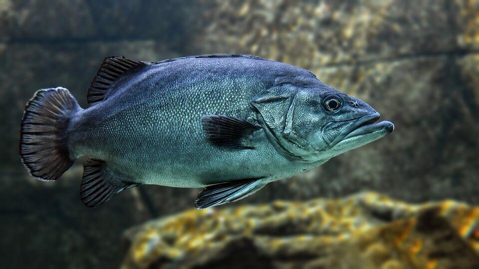 Биологи ТГУ обнаружили вид рыбы, на 100% зараженный описторхами