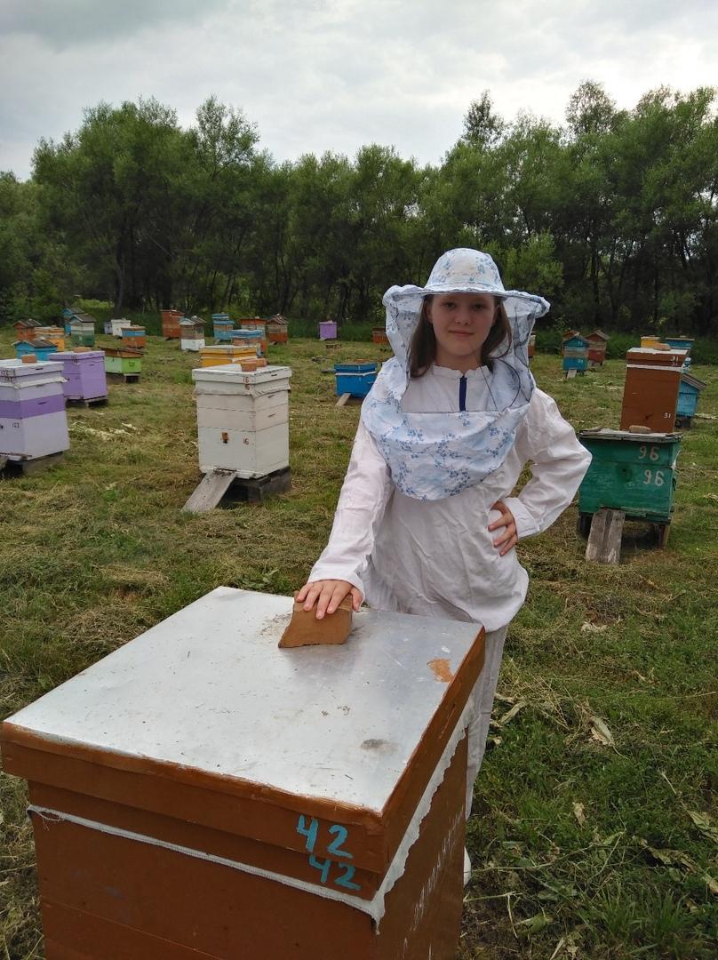 Какие пчелы живут на томских пасеках и кто их разводит