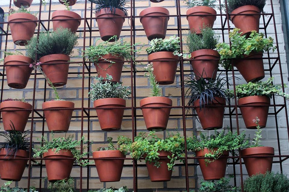 Опасные комнатные растения назвали эксперты