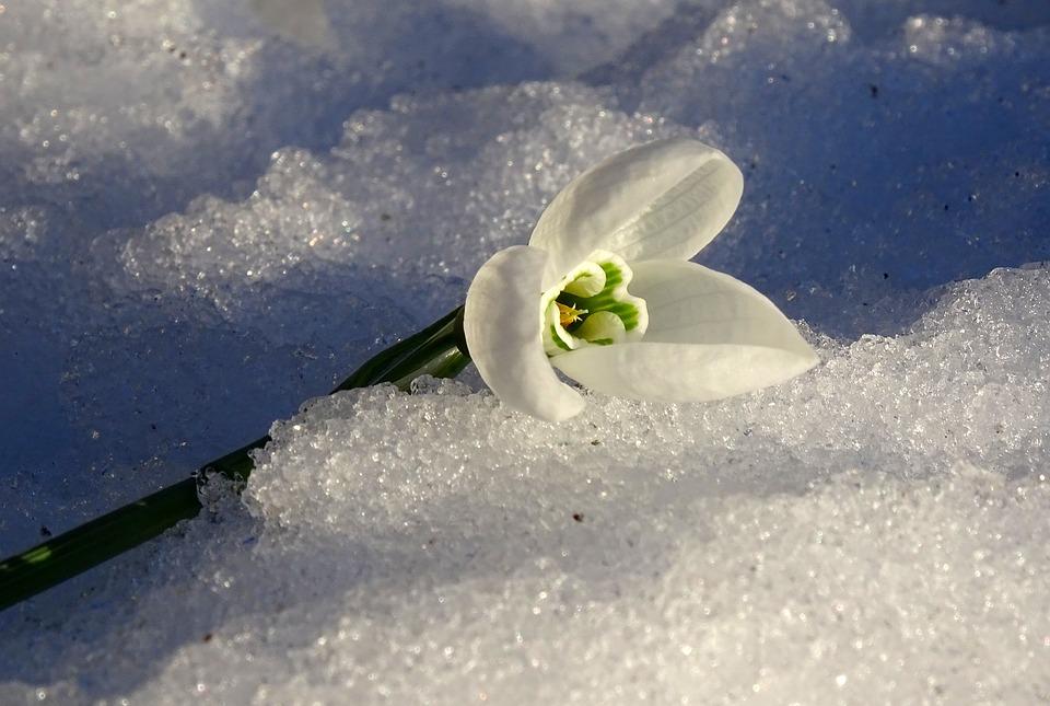 Нас ждет «розовая зима»: что это за явление и к чему стоит готовиться