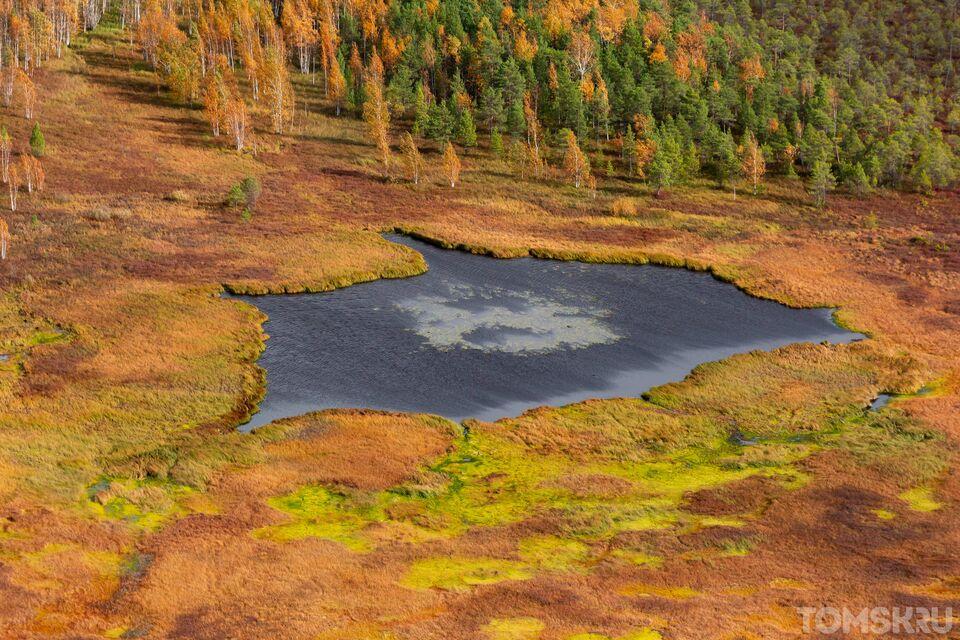 Васюганские болота. Центр мира: «медвежий угол» и опасный зверь