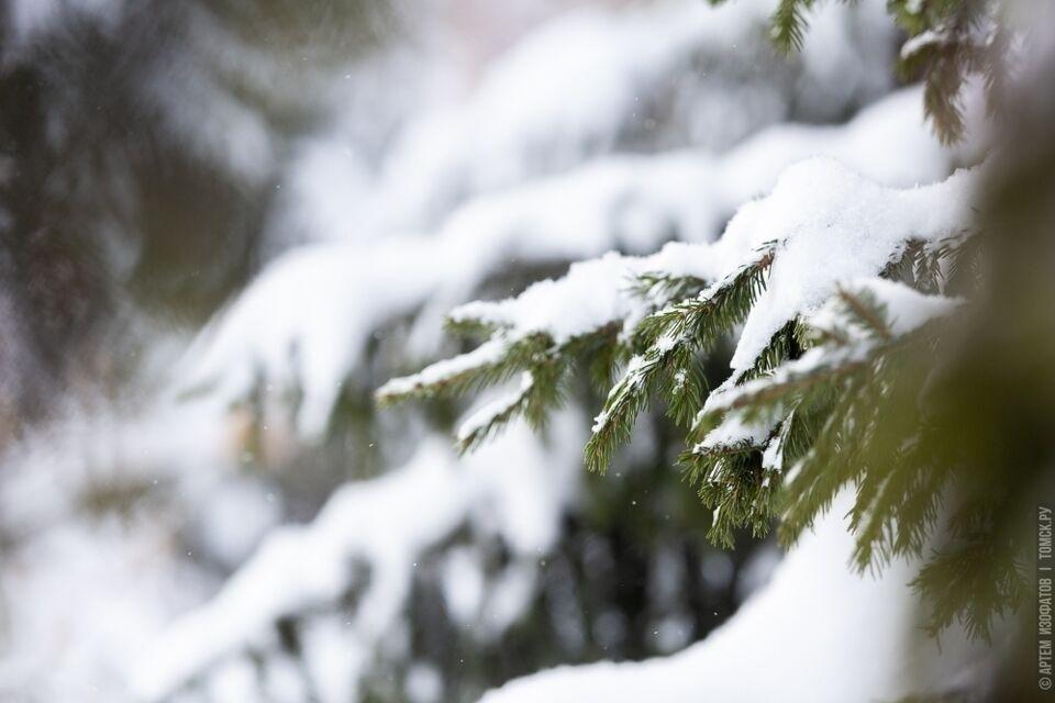 До 15-ти проверок каждый день: стартовали «облавы» на рубщиков елок