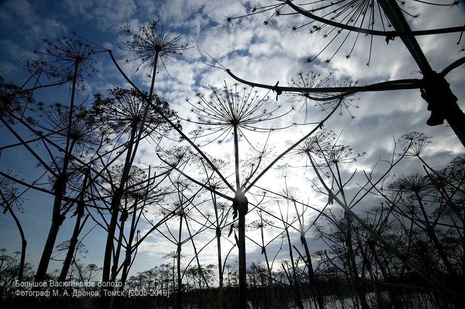 Васюганские болота. Центр мира: есть ли страшные истории про болото?