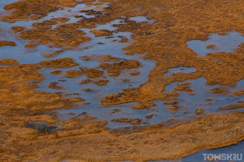 Ученый: запасы нефти рядом с Васюганским болотом истощаются