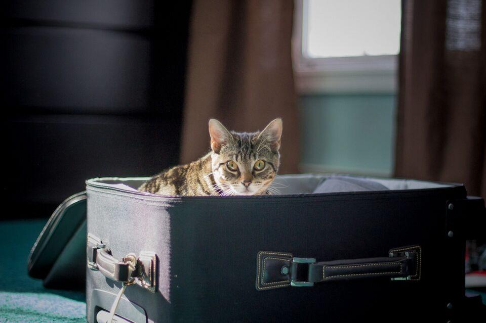 Кошки, которые в этом году стали самыми популярными