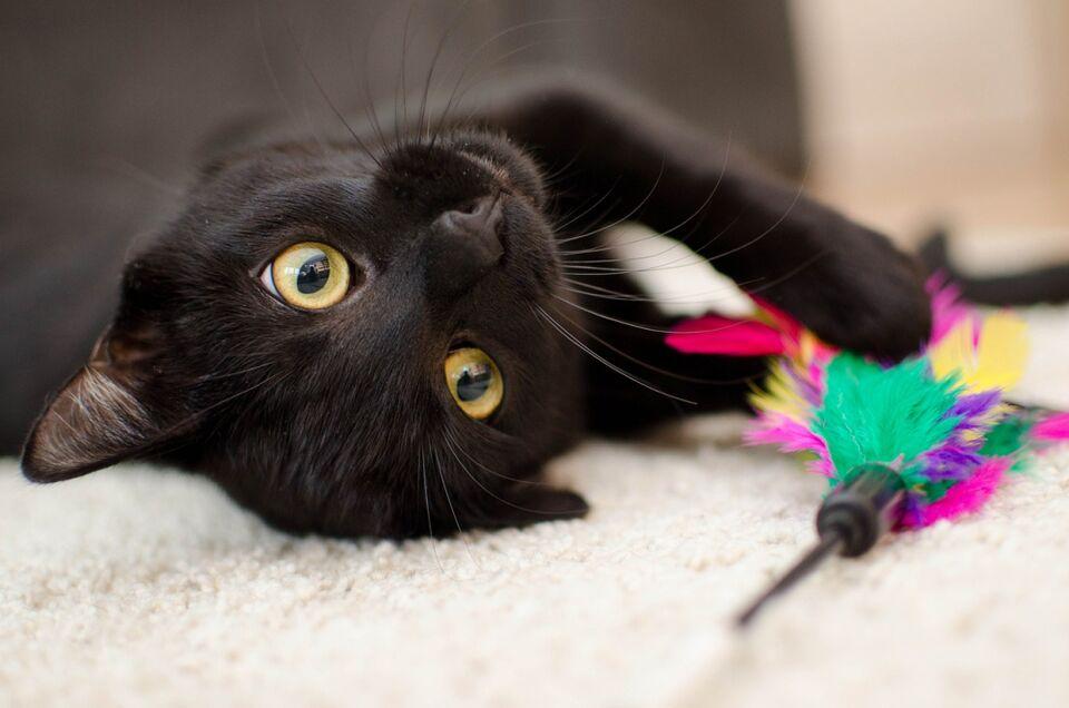 В доме появился котенок: что нужно знать