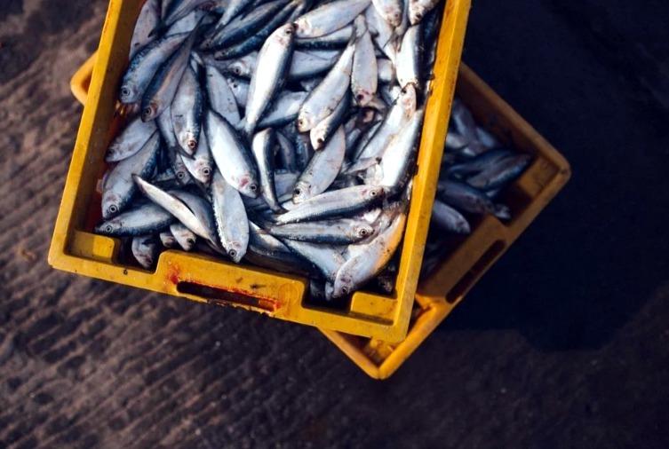 Северчанка обнаружила ужасный сюрприз в красной рыбе