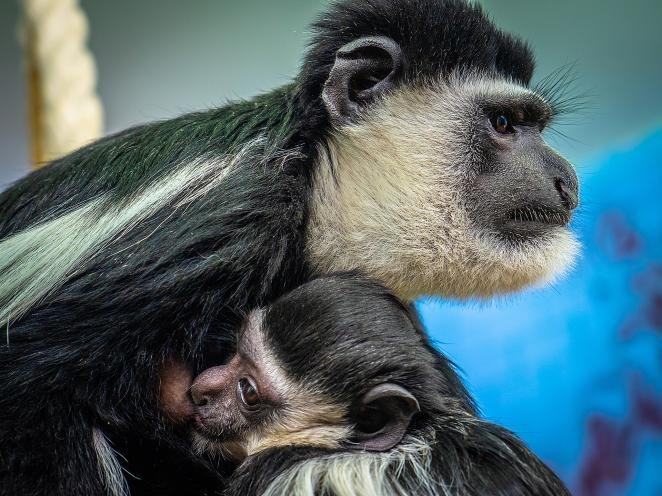 Время даром не теряют: в сибирских зоопарках настоящий бэби-бум