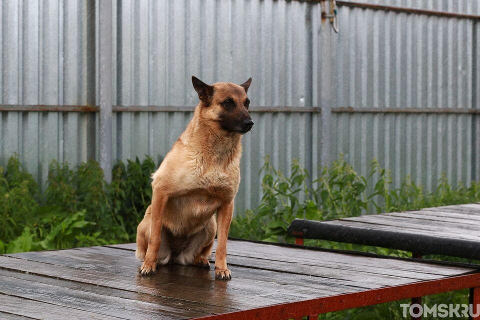 Томичей просят помочь с передержкой собаки пациента с COVID-19