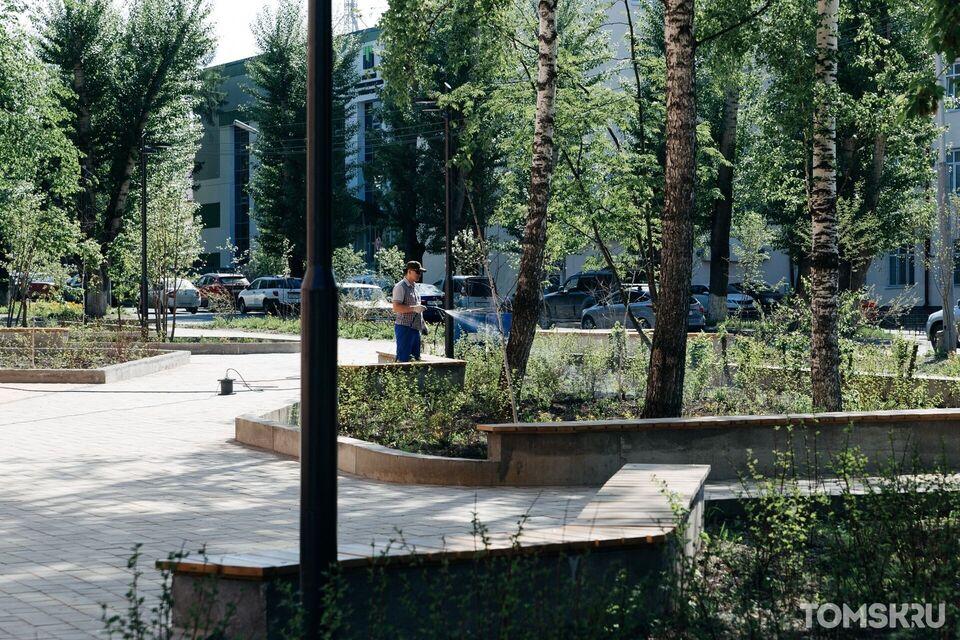 Пять важных вопросов об озеленении в Томске