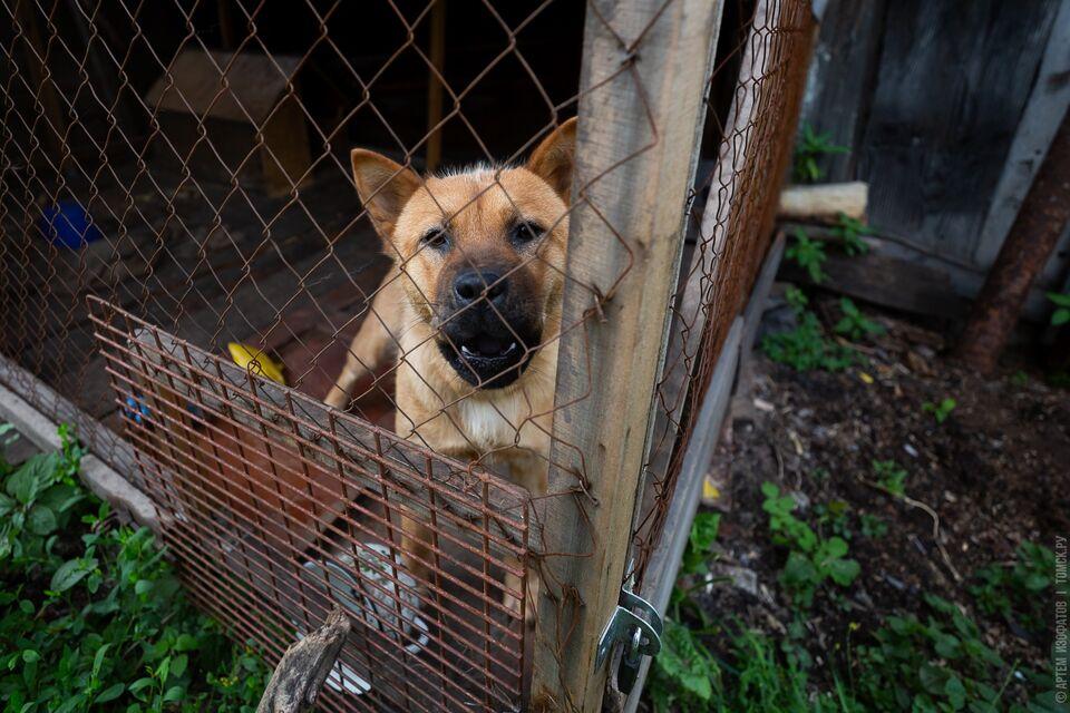 Томичи могут принести корма и помочь животным пережить самоизоляцию