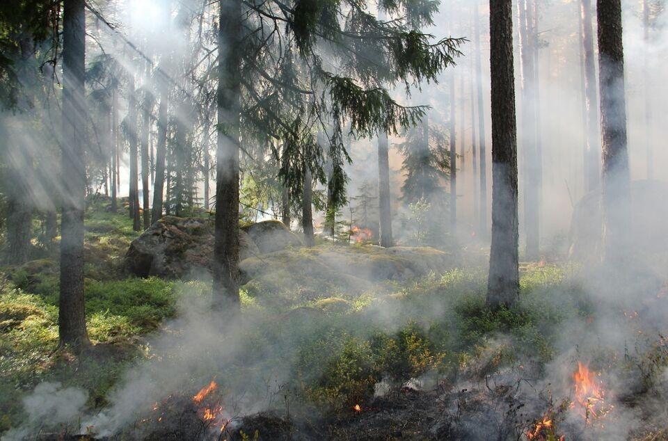 Greenpeace: ситуация с лесными пожарами в Сибири и на Дальнем Востоке повторяется