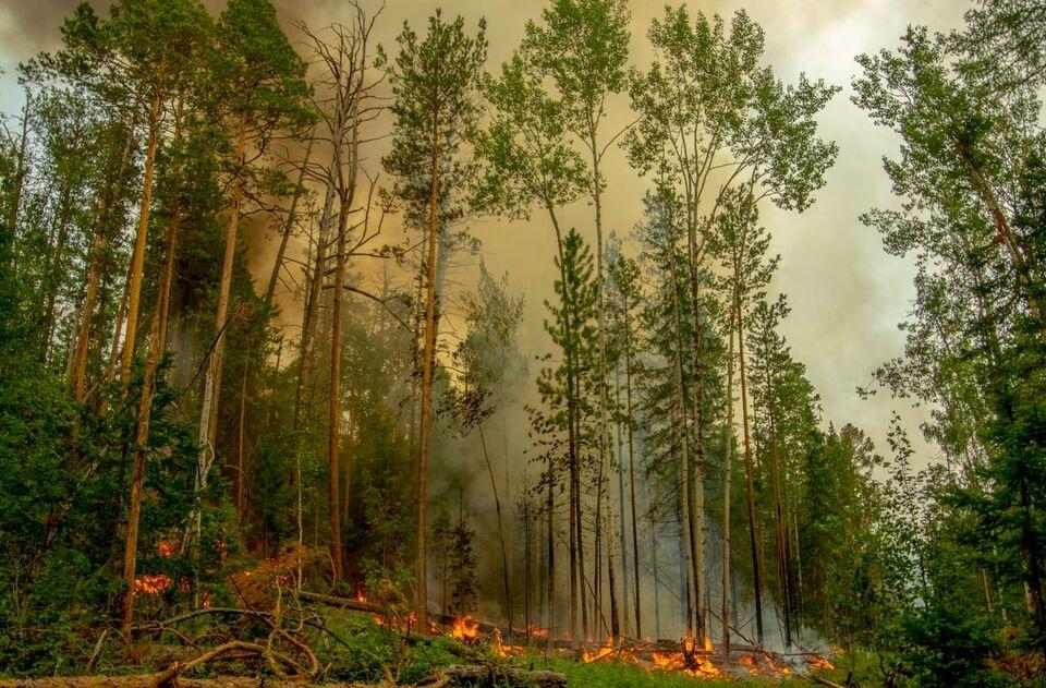 В Сибири потушили крупный пожар методом взрыва