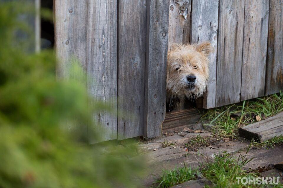 Ученые выяснили, каких собак использовали сибиряки в древности