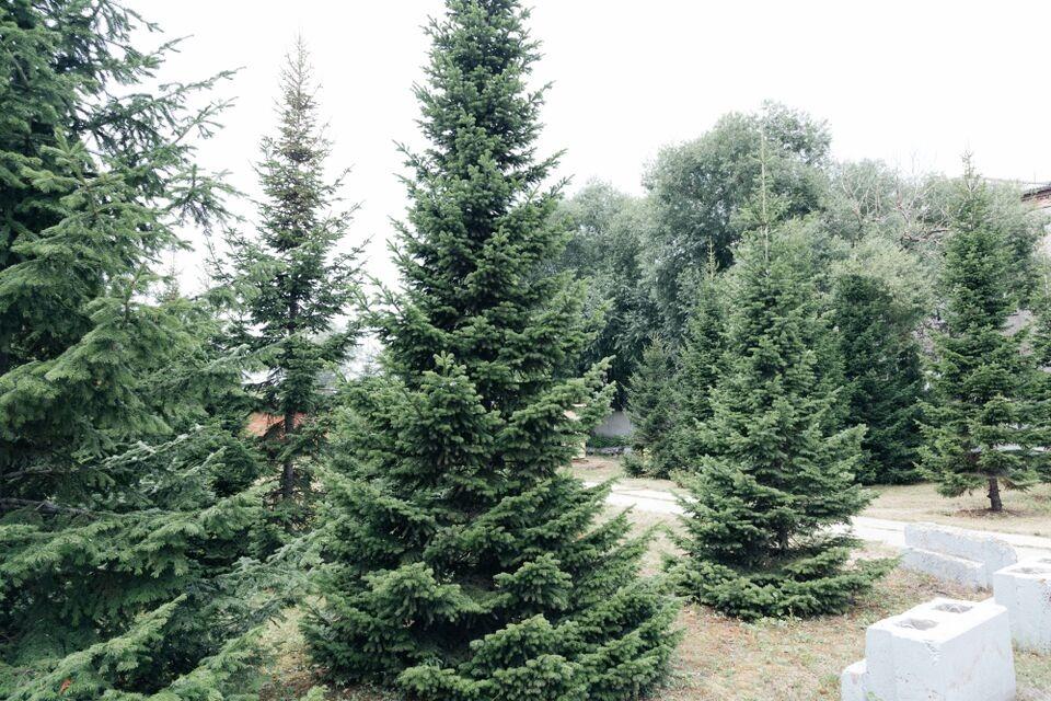 Три жителя Томской области вырубили лес на 1,6 млн рублей