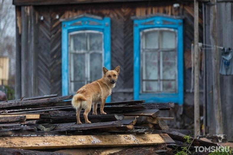 Сибирских животных исследуют как переносчиков коронавируса