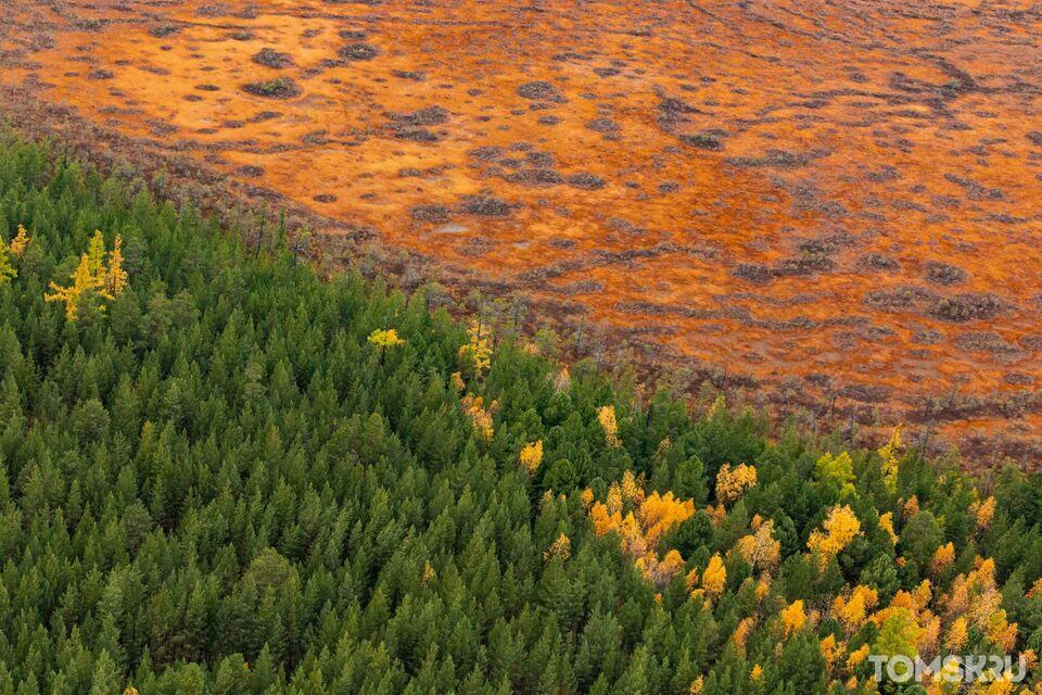 Казаки подключились к охране томских лесов
