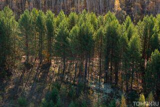 В Томске разработали систему раннего распознавания лесных пожаров