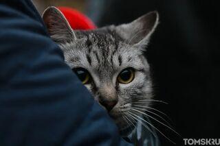 Даже котик в маске: сибиряки обсуждают необычного пассажира городского автобуса