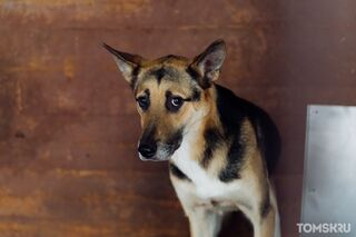 Депутаты обязали томские приюты искать новых хозяев для бродячих собак