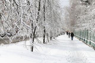 Медики зафиксировали 67 случаев заражения COVID-19 в Томской области