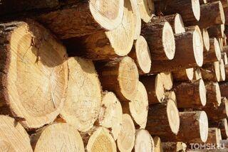 Самый высокий объем нелегальных лесозаготовок зафиксировали в Сибири