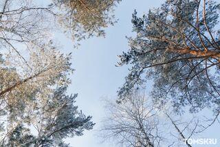 Синоптики обещают трехдневные заморозки в Томской области