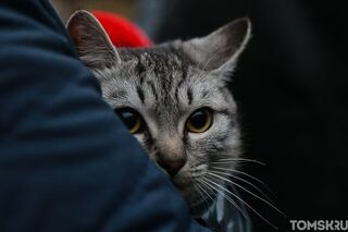 Томичей приглашают на благотворительную ярмарку в помощь животным