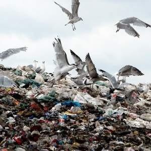 Тем временем, как компании бьются над созданием непохожих на остальных продуктов и упаковок, в стране все более остро встает вопрос утилизации отходов. Самым очевидным выходом из ситуации стало строительство мусоросжигательных заводов. Но так ли этот проект хорош, как представляют себе власти?