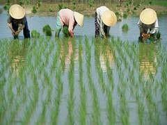 В КНР в условиях кризиса растет внутреннее потребление удобрений, однако при этом падает импорт и экспорт.