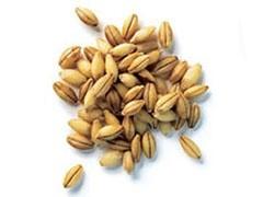 По итогам 2008-2009 МГ Россия экспортировала 21,2 млн тонн пшеницы и ячменя и стала вторым после США игроком мирового зернового рынка.