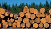 Работники лесной промышленности могут остаться без работы